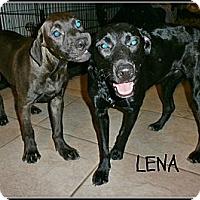 Adopt A Pet :: Lena - Silsbee, TX