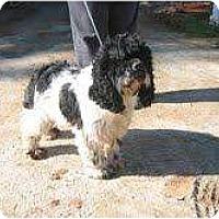 Adopt A Pet :: Gus - Tacoma, WA