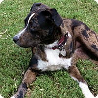 Adopt A Pet :: Lexie - Homewood, AL