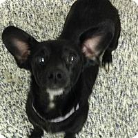 Adopt A Pet :: Makenna - Washington, PA