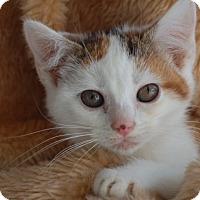 Adopt A Pet :: Lorraine - Delmont, PA