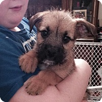 Adopt A Pet :: Collins - Wappingers, NY