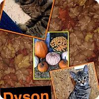 Adopt A Pet :: Dyson - McDonough, GA