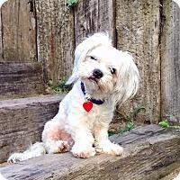 Adopt A Pet :: Todd Tenenbaum - Los Angeles, CA