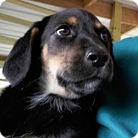 Adopt A Pet :: Cooter - Andalusia, AL