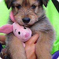 Adopt A Pet :: Piglet - Irvine, CA