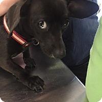 Adopt A Pet :: Jessie - Waycross, GA
