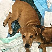 Adopt A Pet :: Barry - New Braunfels, TX