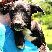 Adopt A Pet :: Tim McGraw~ meet me! - Glastonbury, CT