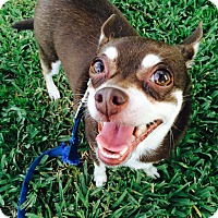 Adopt A Pet :: Angel - Miami, FL