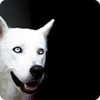 Adopt A Pet :: Frankie - Carrollton, TX