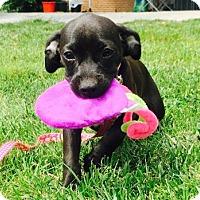 Adopt A Pet :: Judy Jetson - Columbia, MD
