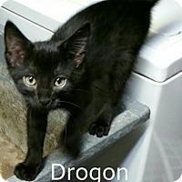 Adopt A Pet :: Drogon - St. Paul, MN