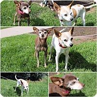 Adopt A Pet :: Ricardo - Logan, UT