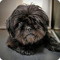 Adopt A Pet :: Raven - Newark, DE
