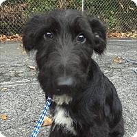 Adopt A Pet :: Lester - Hainesville, IL