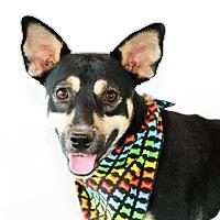 Adopt A Pet :: Camper - Nanaimo, BC