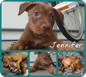 Hound (Unknown Type) Mix Puppy for adoption in Burlington, North Carolina - Jennifer