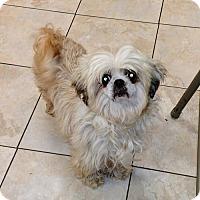 Adopt A Pet :: Becki - Newark, DE