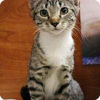 Adopt A Pet :: Bridgette - Athens, GA