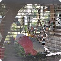 Adopt A Pet :: Rosie - Christmas, FL