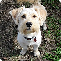 Adopt A Pet :: Teddy - Savannah, GA