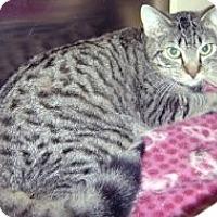 Adopt A Pet :: Luigi - Miami, FL