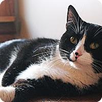 Adopt A Pet :: Daria - Chicago, IL