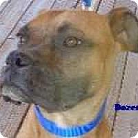 Adopt A Pet :: Dozer - Arenas Valley, NM
