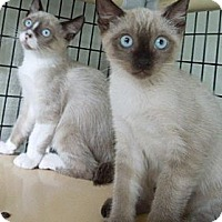 Adopt A Pet :: Button & Beau - Makawao, HI