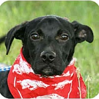 Adopt A Pet :: Toby - In Maine! - kennebunkport, ME