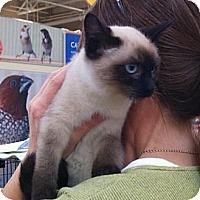 Adopt A Pet :: Paton - Modesto, CA