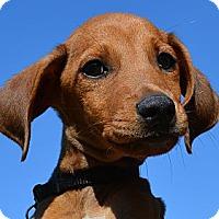 Adopt A Pet :: *Camden - Westport, CT