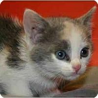 Adopt A Pet :: TINA - SILVER SPRING, MD