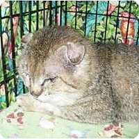 Adopt A Pet :: JamesBond-Pending - Colmar, PA