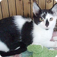 Adopt A Pet :: Regina - Germansville, PA