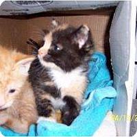 Adopt A Pet :: Marley & Frankie - Island Park, NY