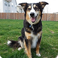 Adopt A Pet :: Casey - Washington, IL
