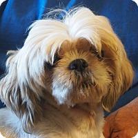 Adopt A Pet :: Bugsy - Prole, IA