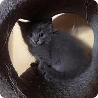 Adopt A Pet :: Aster - Hamilton, ON