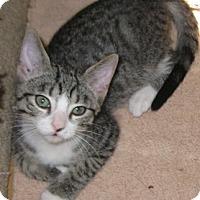 Adopt A Pet :: Kerby - North Highlands, CA