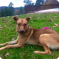 Adopt A Pet :: CHEETO - Paron, AR