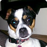 Adopt A Pet :: Bandit - Cincinnati, OH