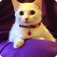 Adopt A Pet :: Paloma - Austin, TX