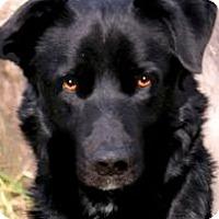 Adopt A Pet :: BROOKS(SOOOO SMART!! - Wakefield, RI