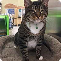 Adopt A Pet :: Gulliver - Burlington, WA