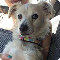 Adopt A Pet :: Jameson - Encino, CA