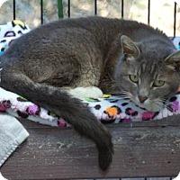 Adopt A Pet :: Misty - El Dorado Hills, CA