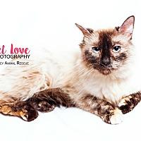 Adopt A Pet :: Brooklyn - Cincinnati, OH