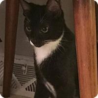 Adopt A Pet :: Coleman - Covington, KY